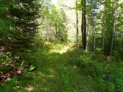 Tomahawk Residential Lots & Land For Sale: On Old 8 Dr