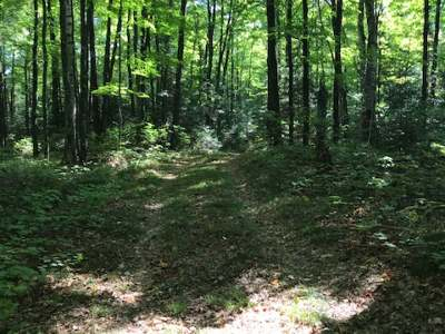 Lynne WI Residential Lots & Land For Sale: $115,000
