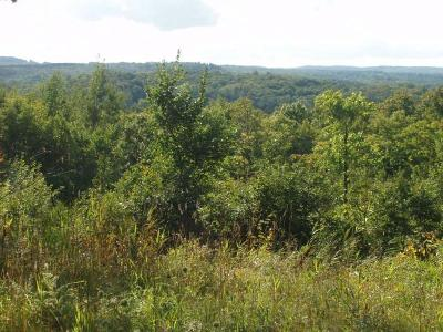 Residential Lots & Land For Sale: On Haugen Rd
