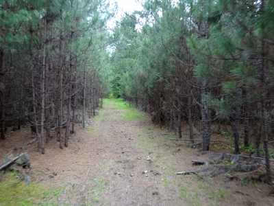 Minocqua WI Residential Lots & Land For Sale: $69,900