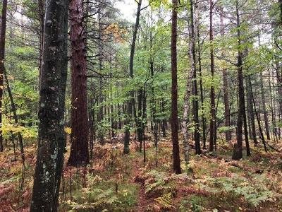 Rhinelander Residential Lots & Land For Sale: 2.81 Ac Shatkus Ln