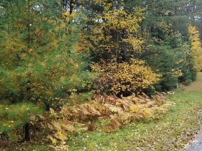 Eagle River WI Residential Lots & Land For Sale: $16,900