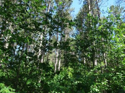 Rhinelander Residential Lots & Land For Sale: On Wolf Lake Rd