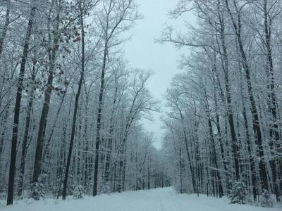 Residential Lots & Land For Sale: Off Hwy 17 #Lot 2&am