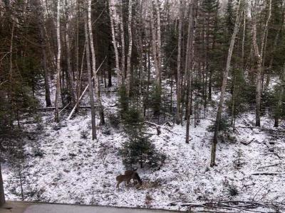 Residential Lots & Land For Sale: On Hwy 17 #Lot 8