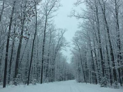 Residential Lots & Land For Sale: On Hwy 17 #Lot 2