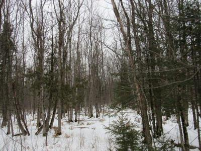 Antigo Residential Lots & Land For Sale: On Western Ave
