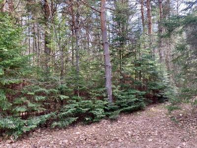 Residential Lots & Land For Sale: Lot #3 Hemlock Ln