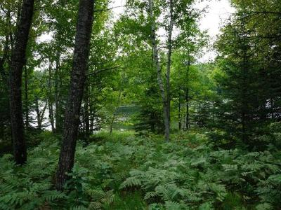 Residential Lots & Land For Sale: 40 Acres Murphy Lake Rd
