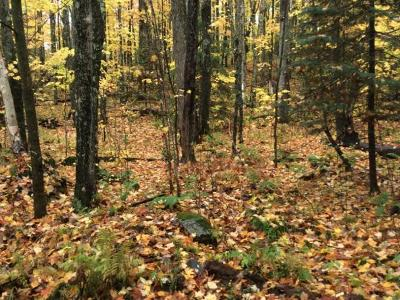 Residential Lots & Land For Sale: On Ridgeview Ln