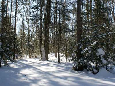 Residential Lots & Land For Sale: Lot 9 Bobcat Rd