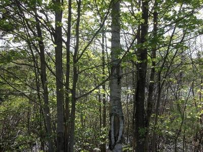Residential Lots & Land For Sale: Lot 2 Beaver Lodge Rd