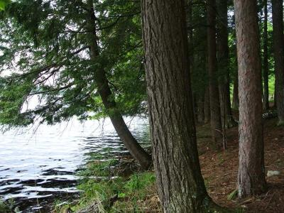Three Lakes WI Residential Lots & Land For Sale: $275,000