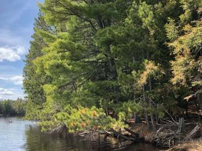 Three Lakes WI Residential Lots & Land For Sale: $259,000