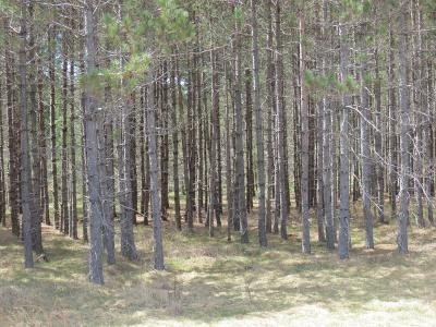 Rhinelander Residential Lots & Land For Sale: Off Cth C