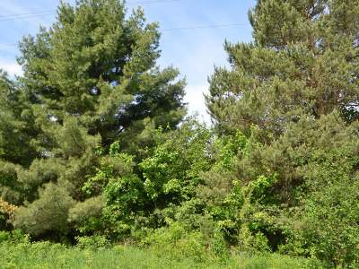 Residential Lots & Land Sold: On Ogema Prentice Rd