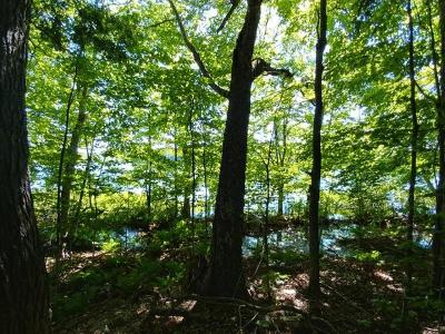 Residential Lots & Land For Sale: On Sugar Maple Rd
