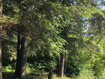 Residential Lots & Land For Sale: On Palmer Lake Rd
