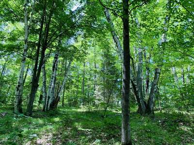 Residential Lots & Land For Sale: On Lower Long Lake Dr
