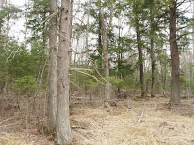 Butternut Residential Lots & Land For Sale: On Weinberger Rd
