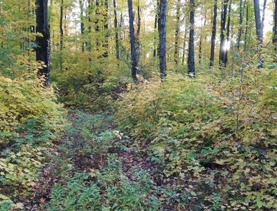 Residential Lots & Land For Sale: Off Wildwood Ave