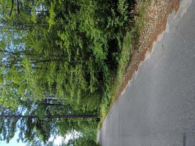 Residential Lots & Land For Sale: 7238 Chicken In The Woods Rd