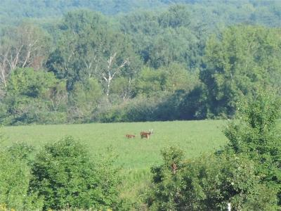 Jackson County, Clark County, Trempealeau County, Buffalo County, Monroe County, Chippewa County, Eau Claire County Residential Lots & Land For Sale: Hwy 29