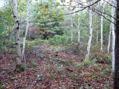 Black River Falls WI Residential Lots & Land Sold: $13,000