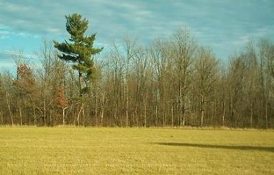 Jackson County, Clark County, Trempealeau County, Buffalo County, Monroe County, Chippewa County, Eau Claire County Residential Lots & Land For Sale: 23001 State Hwy 64