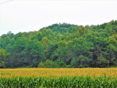 Jackson County, Clark County, Trempealeau County, Buffalo County, Monroe County, Chippewa County, Eau Claire County Residential Lots & Land For Sale: Lot 1 79.65 Acres County Highway S