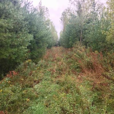 Jackson County, Clark County, Trempealeau County, Buffalo County, Monroe County, Chippewa County, Eau Claire County Residential Lots & Land For Sale: County Road M