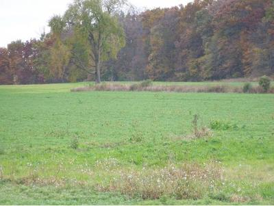 Residential Lots & Land Active-No Offer: Forest Avenue