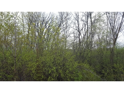 Residential Lots & Land For Sale: 1870 Andrea Michelle Ct