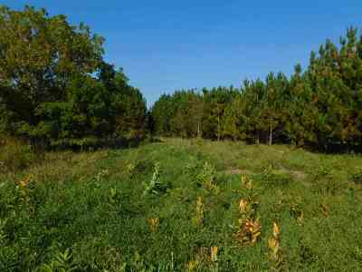 Residential Lots & Land For Sale: 3397 Hwy J