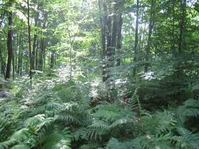 Marinette County Residential Lots & Land Active-No Offer: W16255 Hwy C