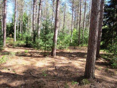 Suring Residential Lots & Land Active-No Offer: Peshtigo Brook