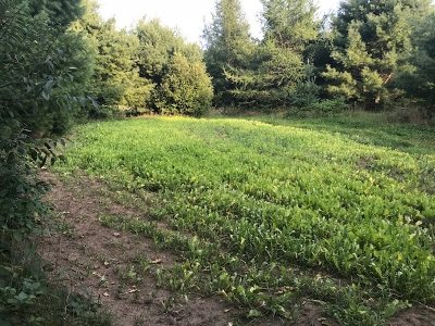 Marinette County Residential Lots & Land Active-No Offer: W2617 Hwy 180