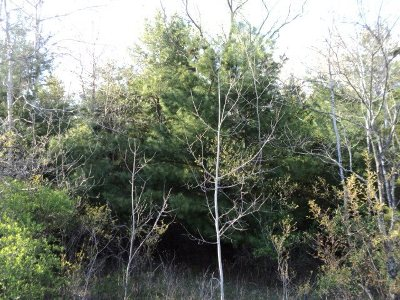 Wisconsin Dells Residential Lots & Land For Sale: L91 Fur Dr