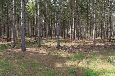 Adams Residential Lots & Land For Sale: 40 Ac 9th Dr