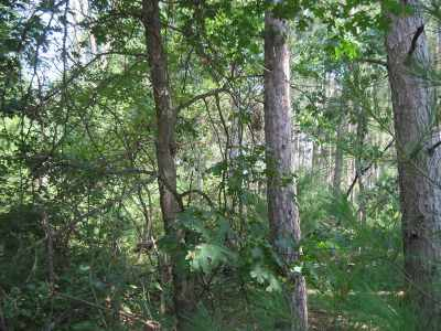 Arkdale Residential Lots & Land For Sale: L96 20th Ct