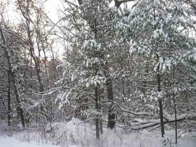 Arkdale Residential Lots & Land For Sale: 1 Ac Badger Ct