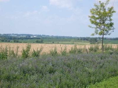 Sun Prairie Residential Lots & Land For Sale: 6841 Angelica Tr