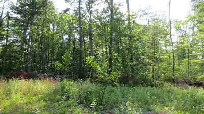 Lewisburg Residential Lots & Land For Sale: Lot 28 Woodhaven Subdivision