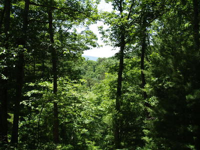 White Sulphur Springs Residential Lots & Land For Sale: 565 Greenbrier Mountain Trail