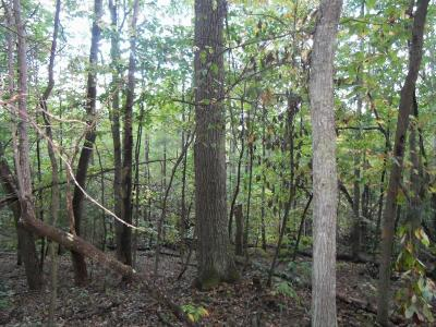 Gap Mills WV Residential Lots & Land For Sale: $29,500