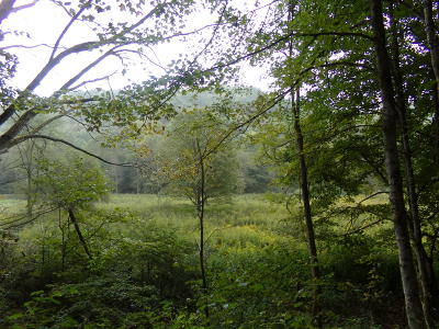 Residential Lots & Land For Sale: Robbins Fork Road
