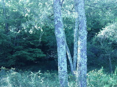 Rainelle WV Residential Lots & Land For Sale: $65,000