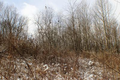 Residential Lots & Land For Sale: Locust Creek