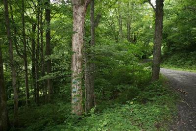 Residential Lots & Land For Sale: Wolf Pen Run