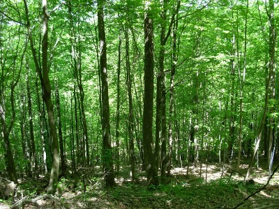 New Martinsville WV Residential Lots & Land For Sale: $198,000